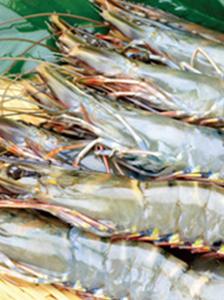 TOYOTA TSUSHO FOODS CORPORATION